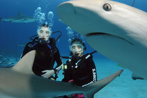 photo of SCUBA divers underwater, with sharks swimming close by