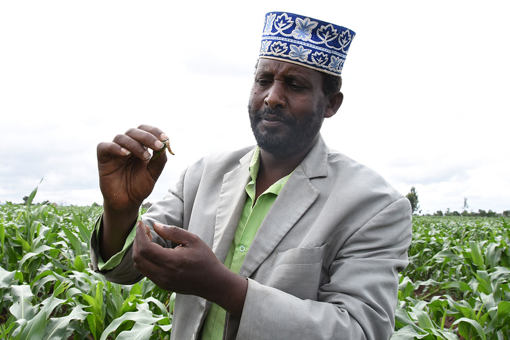 photo of a man in a field examining a pest