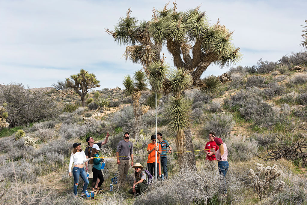 photo of people in a desert woodland, measuring a Joshua tree