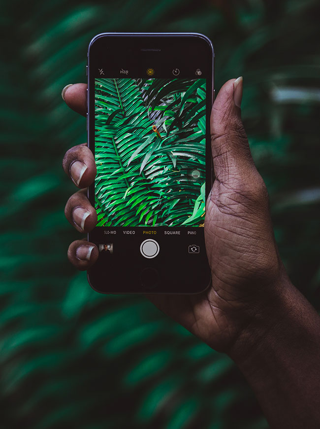 photo of someone holding a mobile phone, photographing a fern