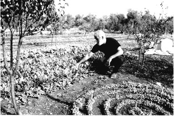 Mohamed Isa Abebi in his garden. Kate Rogers Gessert photo.