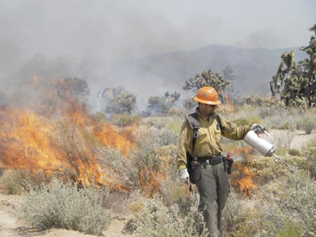 A firefighter sets a backfire to limit the spread of the Hackberry Fire. Photo Rob Fulton, CSU Desert Studies Center