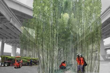 photo artwork showing construction workers around bamboo growing near a maze of freeway viaducts