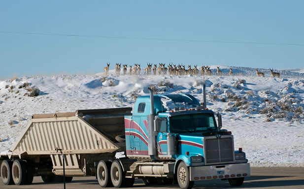 photo of pronghorn watching a tractor-trailer truck on a road, from a snow-covered hill