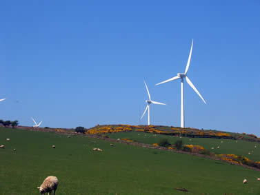 photo of wind turbines standing over a green landscape with sheep and heather evident