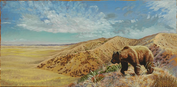 a grizzly on a grassland hill