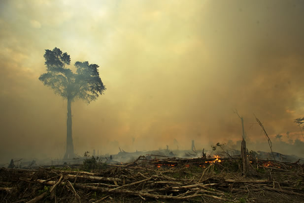 photo of a tropical forest on fire