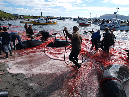 photo of a beach crowded with people and partly butchered whales, boats nearby float on a sea red with blood