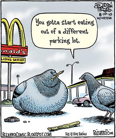 comic artwork depicting two pigeons in a McDonald's-like parking lot; a normally proportioned one is commenting to a bloated one (holding a french-fry in its beak) that it needed to eat out of a different parking lot
