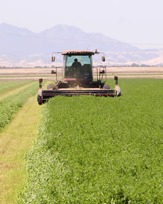 photo of a mechanical harvester in alfalfa