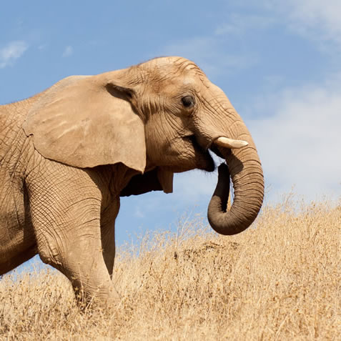 photo of an elephant
