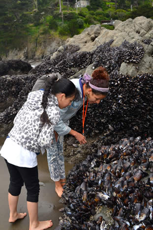 photo of children examing mussels at the shore