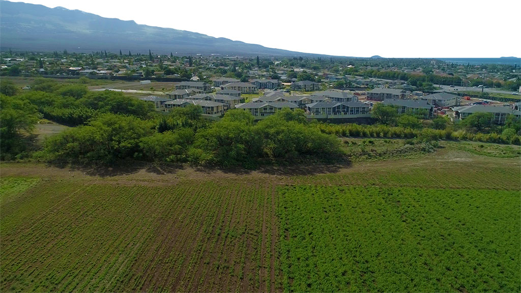 aerial photo of a cultivated field, new homes clustered nearby