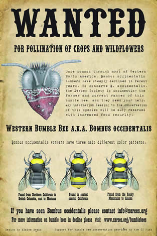 poster, with drawings of bees; words, Wanted for Pollination of Crops and Wildflowers ... if you have seen Bombus occidentalis please contact info@xerces.org
