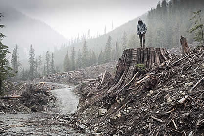 photo of a man standing on an enormous stump in a clear-cut forest, devastation all around