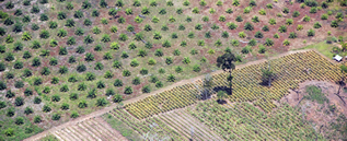 aerial photo of a tree plantation