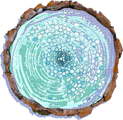 artwork depicting an engineered tree trunk in cross section