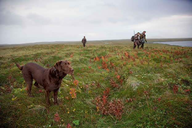 photo of a dog outdoors, people with hunting equipment nearby