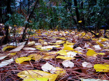 photo of a forest floor littered with leaves