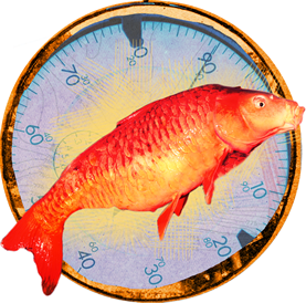 photo collage of a thermometer and a carp