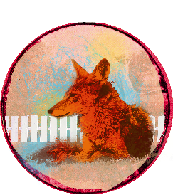 photo artwork of a coyote near a picket fence