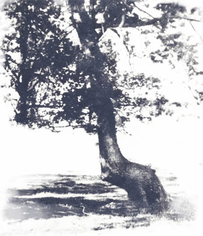 woodcut-like image of a thong tree