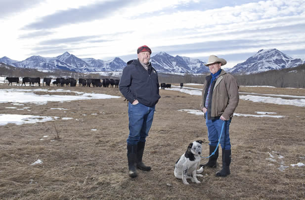 photo of men and a dog on a prairie, cattle and high mountains in the background