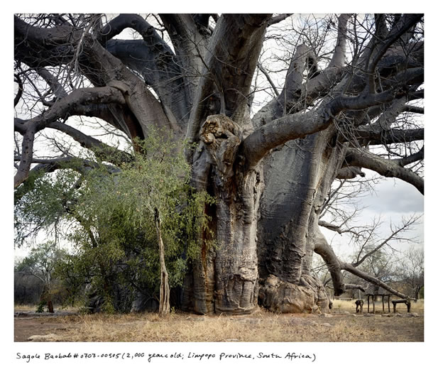 photo of an enormous tree