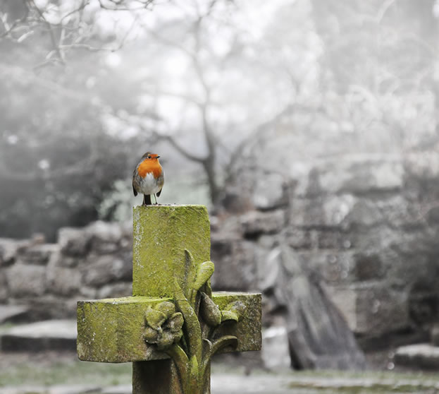 photo of a bird perched on a tombstone