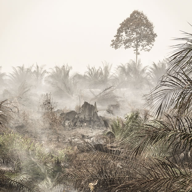 photo of a burned tropical forest