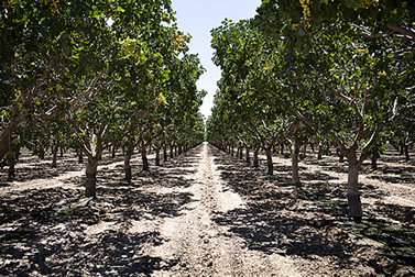 photo of dry soil in a great orchard