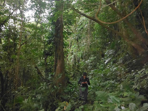 photo of a woman hiking in a tropical forest