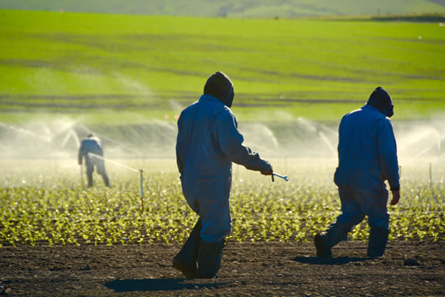 photo of agricultural workers in a field being irrigated
