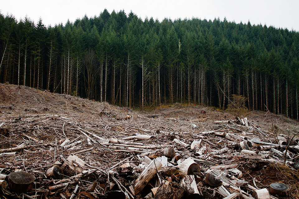 """The most comprehensive scientific study of the relationship between logging and wildland fires found that the more trees that are removed from our forests through """"thinning"""" and """"fuel reduction,"""" the hotter and faster fires burn. Photo by Calibas / Wikimedia."""