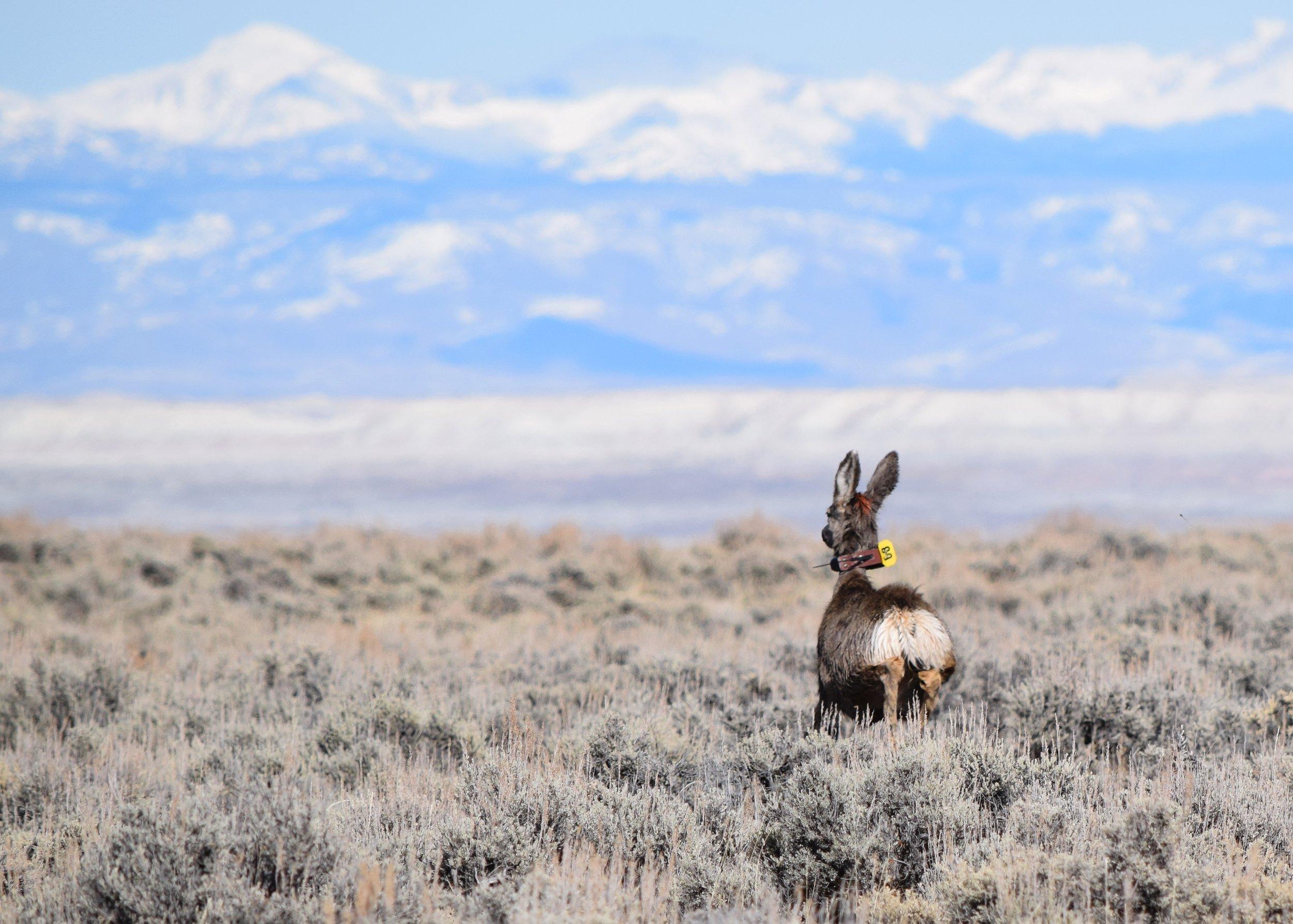 Photo courtesy of Deer 139.