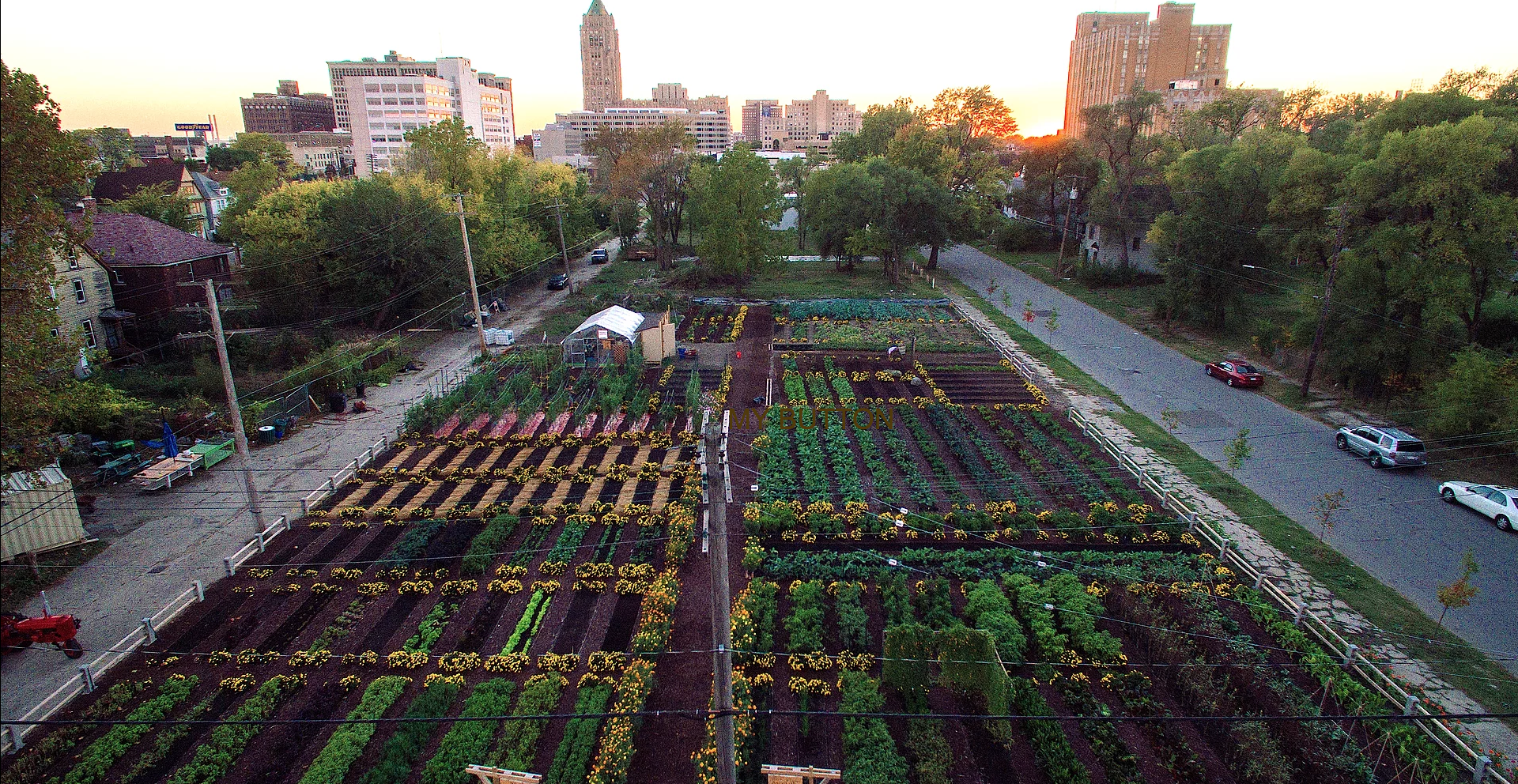 Photo courtesy of Michigan Urban Farming Initiative.