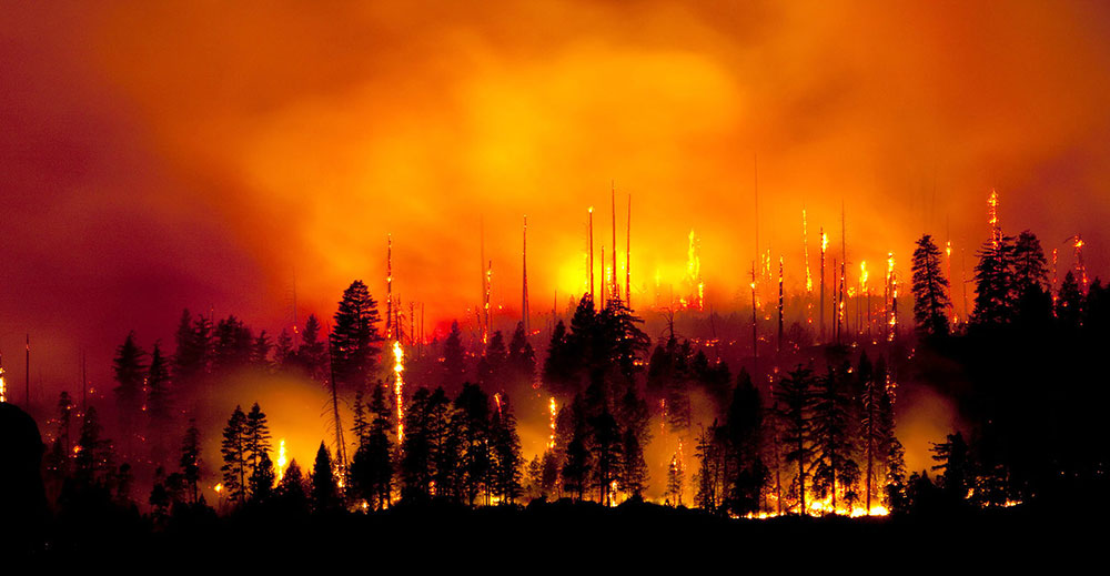 New research indicates that particulate matter from wildfires can impact the health of plants hundreds of kilometers away. Photo Salam2009