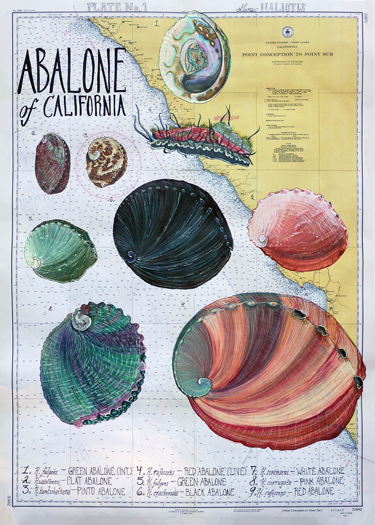 artwork, depicting a map of California and abalone species by shell