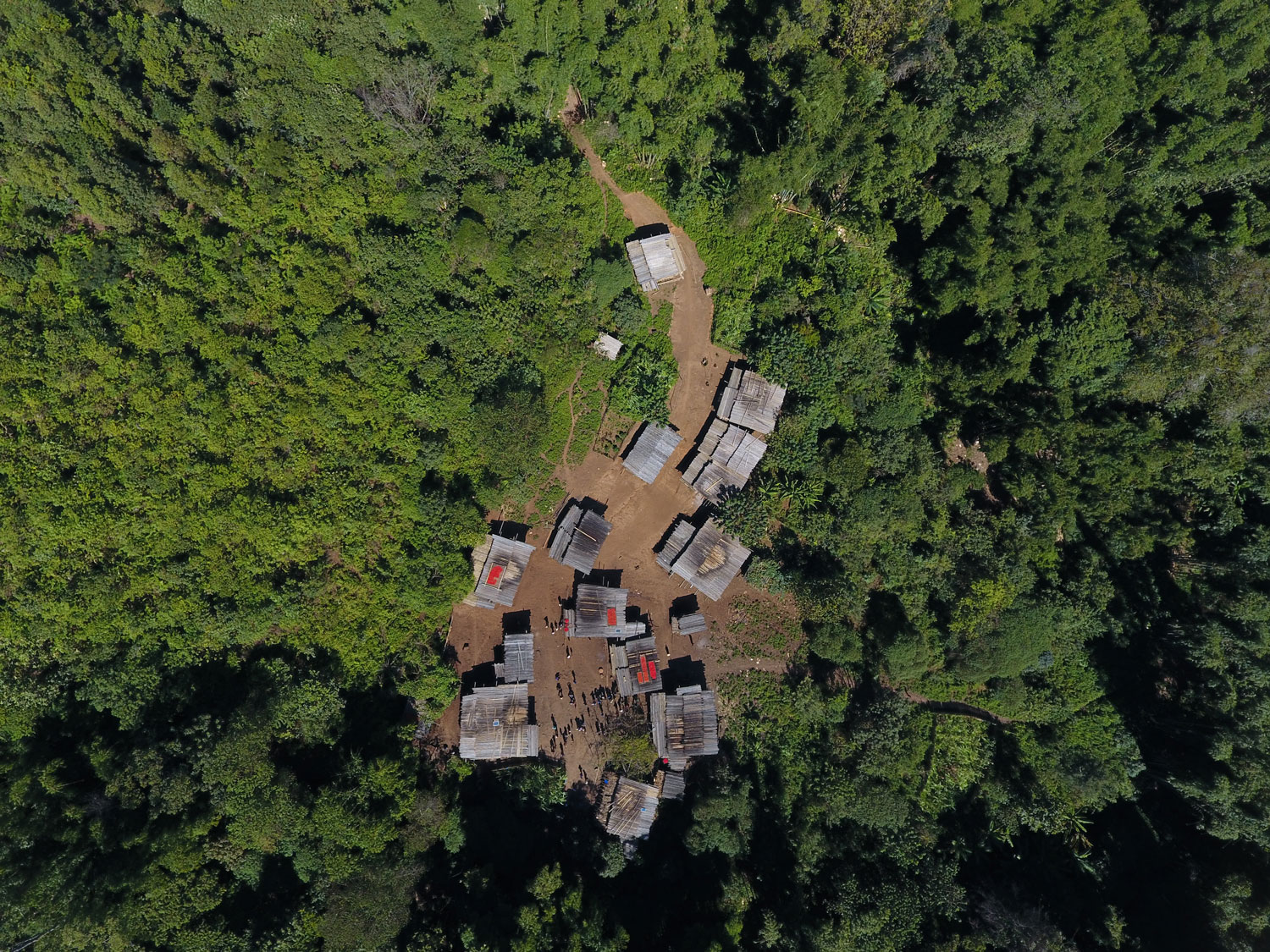 aerial photo of a community in a forest