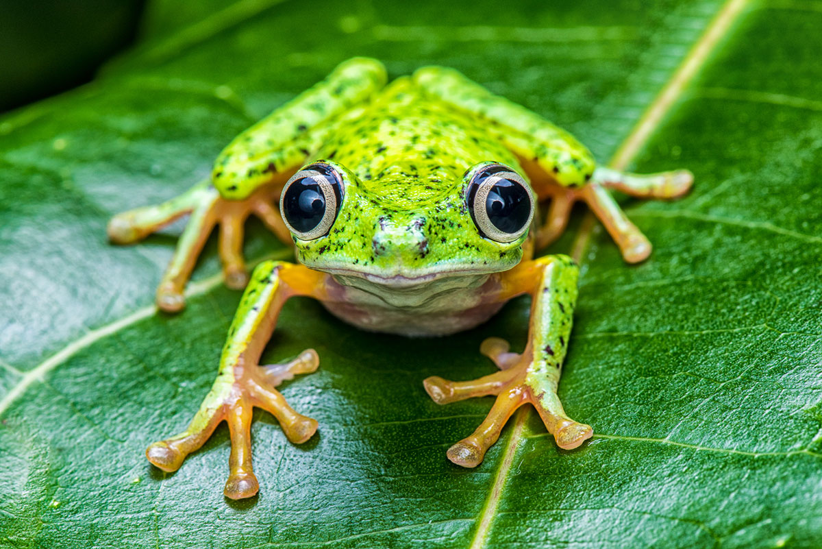 In 2004, chytrid fungus wiped out half the frog species native to El Copé, Panama. The species that survived seem to have developed the ability to coexist with the fungus.