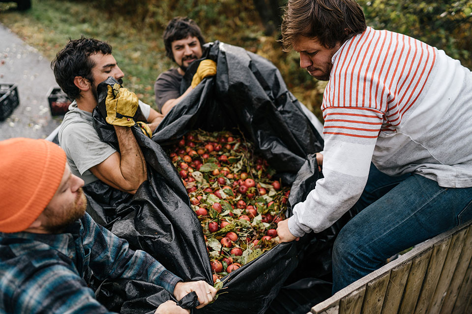 Heritage apples aren't a profitable undertaking for orchardists, but the Lost Apple Project is doing what it can to boost demand. Photo by Michael Tallman.