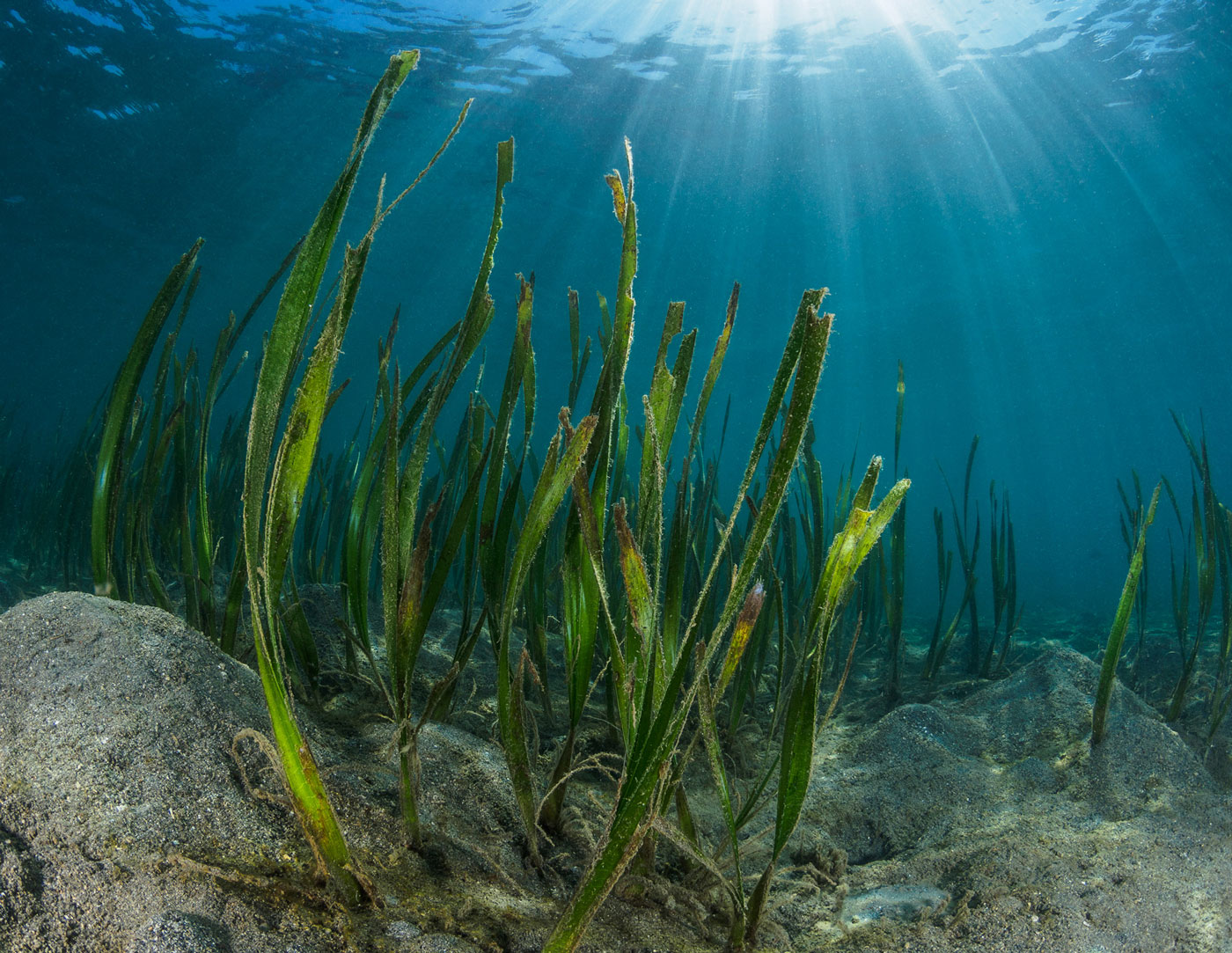 photo of seagrass