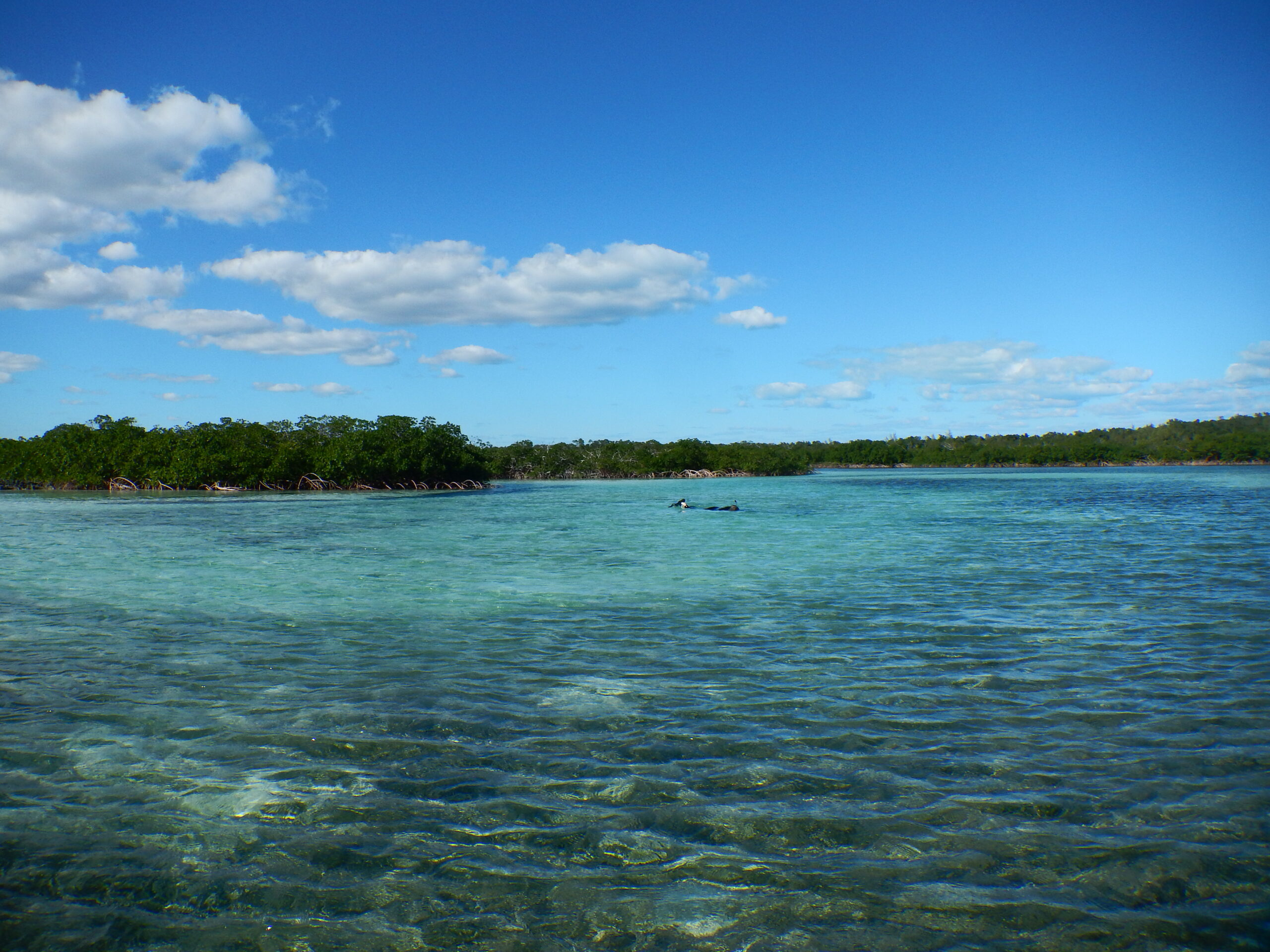 photo of abaco island estuary