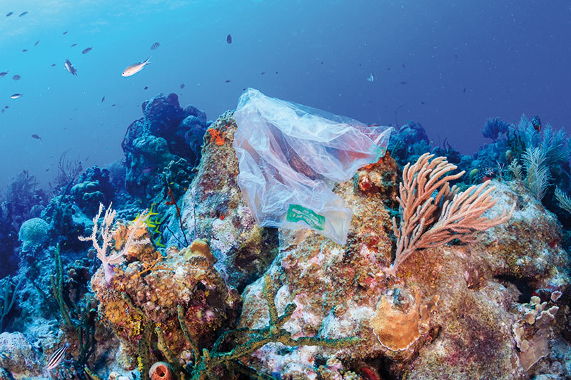underwater photo of plastic trash on a reef
