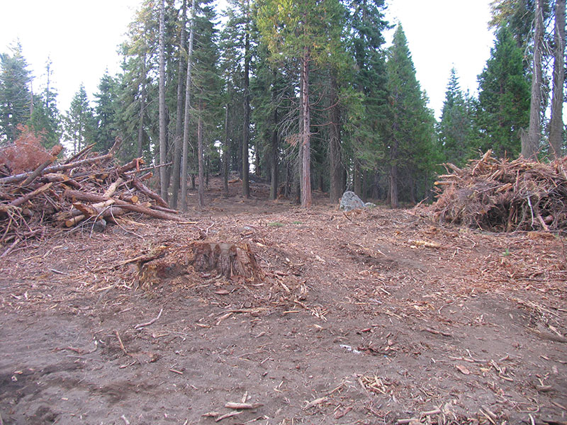 photo of a clearcut in a forest