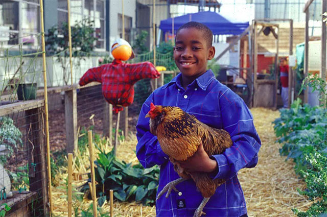 photo of a child in a garden with a chicken