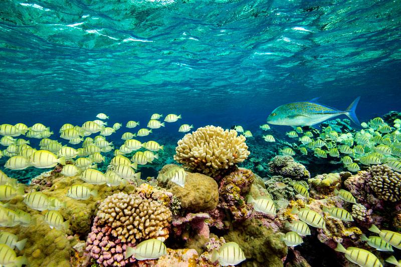 underwater photo, reef creatures