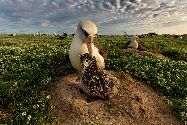 photo of a seabird ground nesting