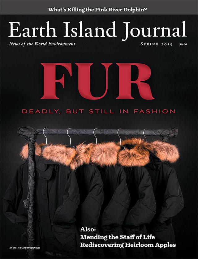 magazine cover thumbnail
