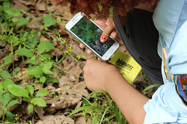 photo of someone using a cellphone to document an assemblage of plants